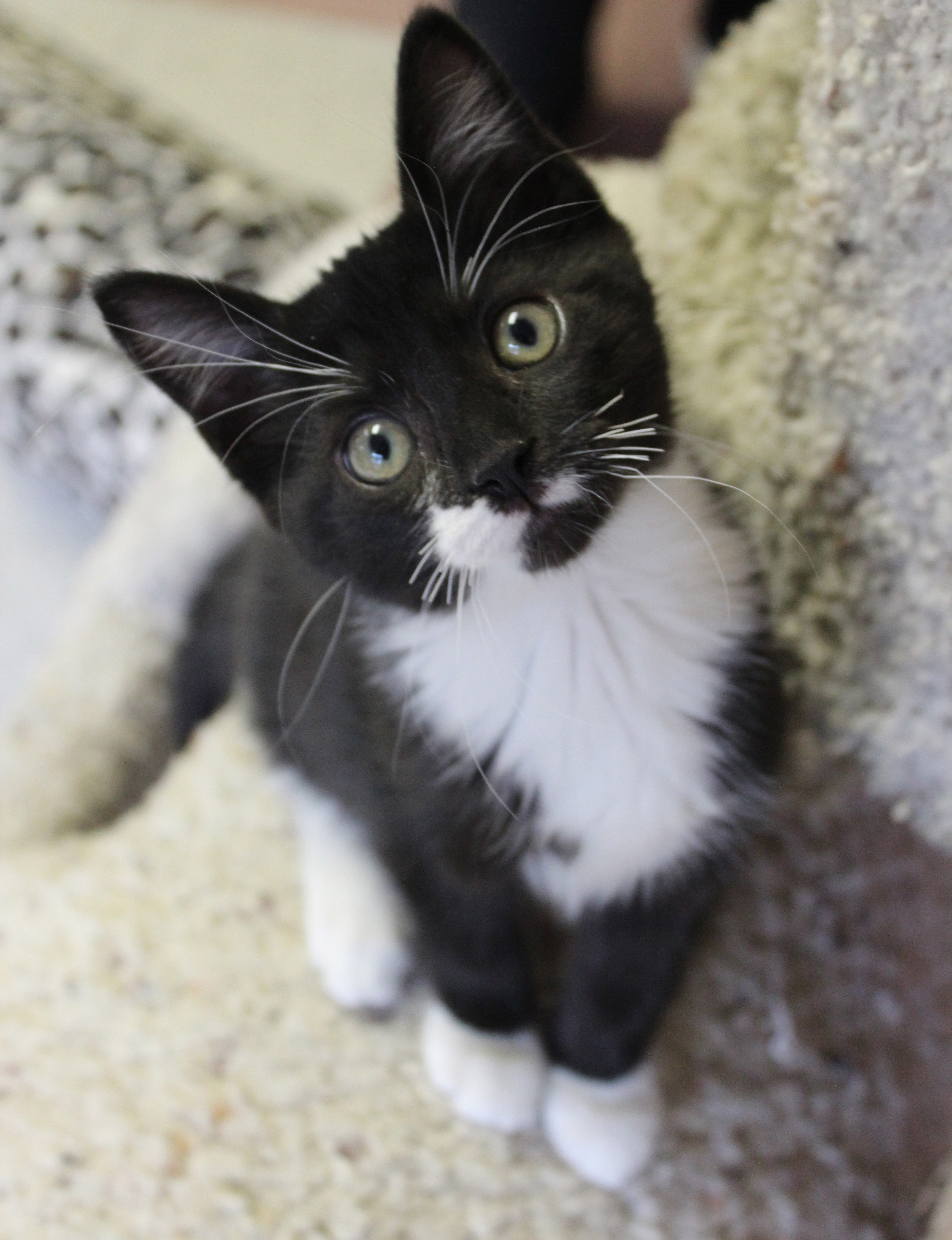 Ways To Give Friends Of The Bristol Animal Shelter